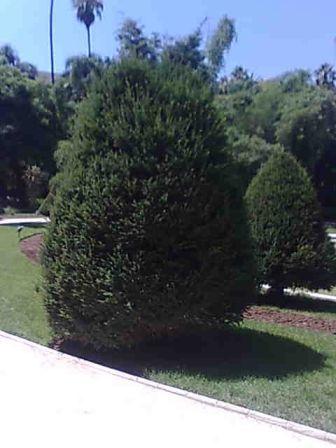Photo d'arbre If10