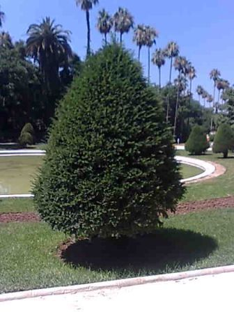 Photo d'arbre If110