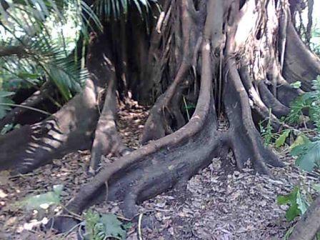 Photo d'arbre Nebari12