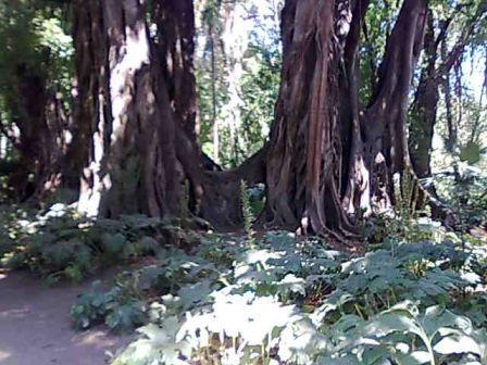 Photo d'arbre Nebari13