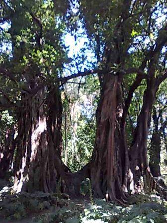 Photo d'arbre Nebari14
