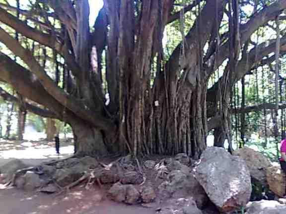 Photo d'arbre Photo023