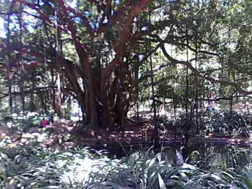 Photo d'arbre Photo024