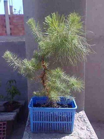jeunes plants Untitl10