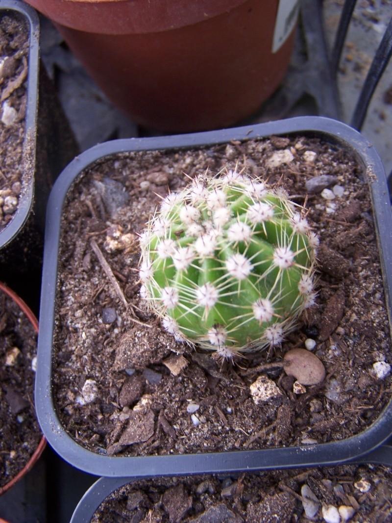 Quelques succulentes A_iden10