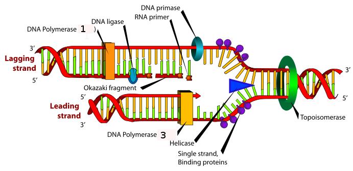 La Microbiologie Dna_re10