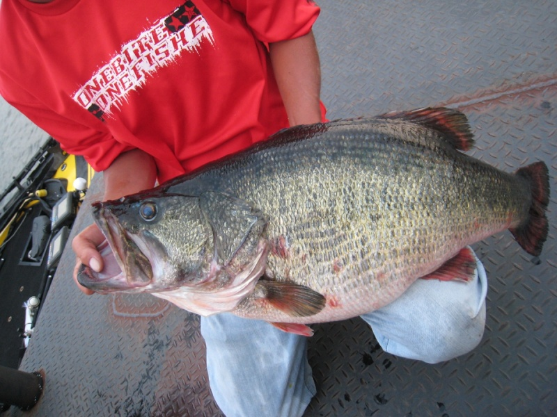 Possible New World Record Largemouth Bass Depsok10