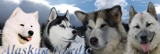 Alaskan nordic - Portail Getatt10