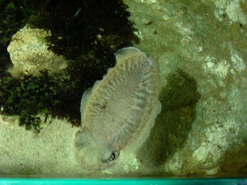 Aquarium La Rochelle Dscn4012