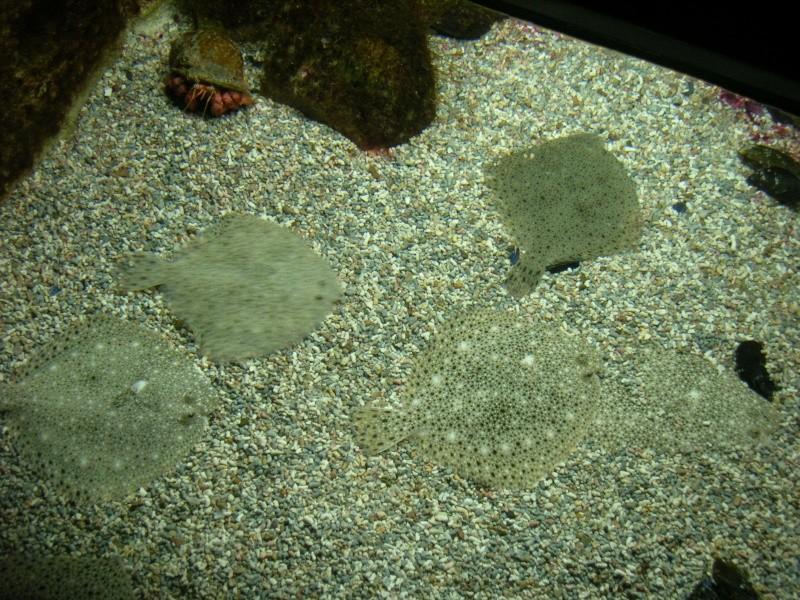Aquarium La Rochelle Dscn4013
