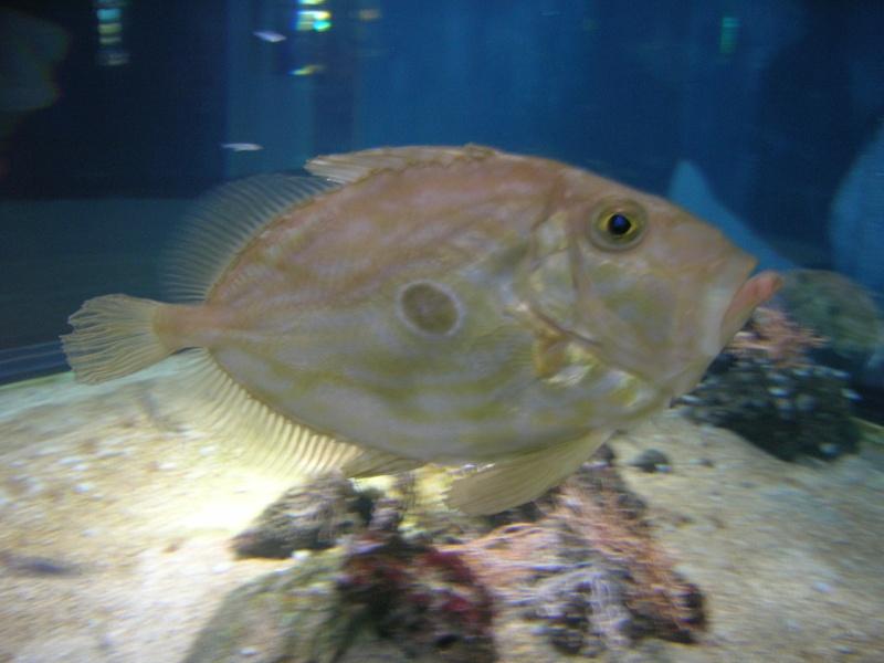 Aquarium La Rochelle Dscn4015