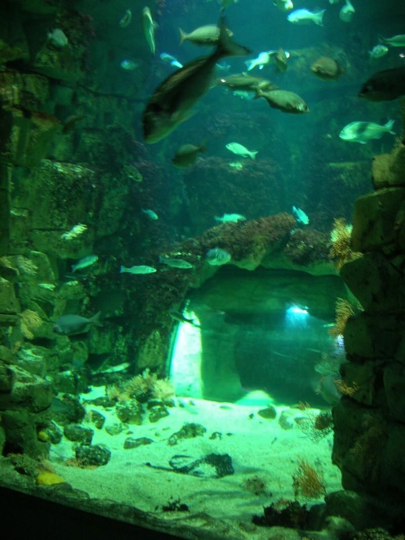 Aquarium La Rochelle Dscn4016