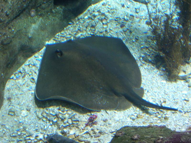 Aquarium La Rochelle Dscn4020