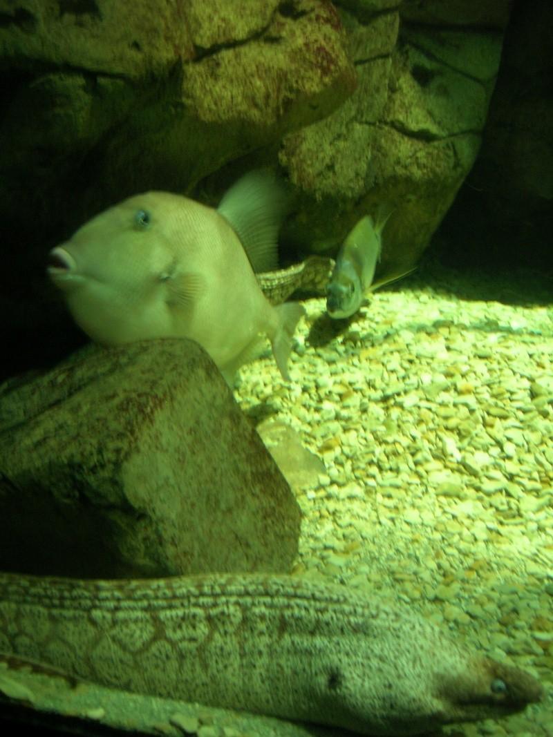 Aquarium La Rochelle Dscn4110