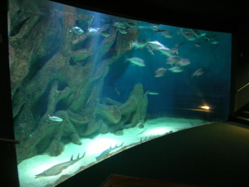 Aquarium La Rochelle Dscn4111