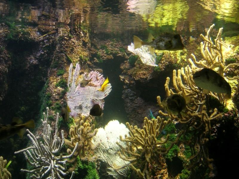 Aquarium La Rochelle Dscn4114
