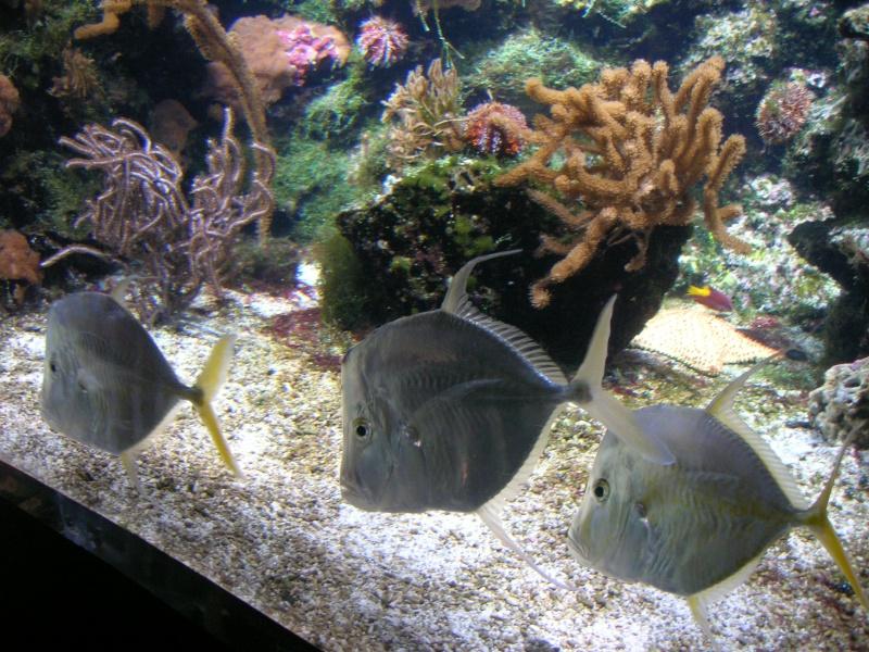 Aquarium La Rochelle Dscn4210