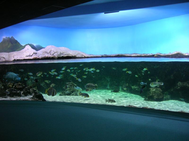 Aquarium La Rochelle Dscn4211