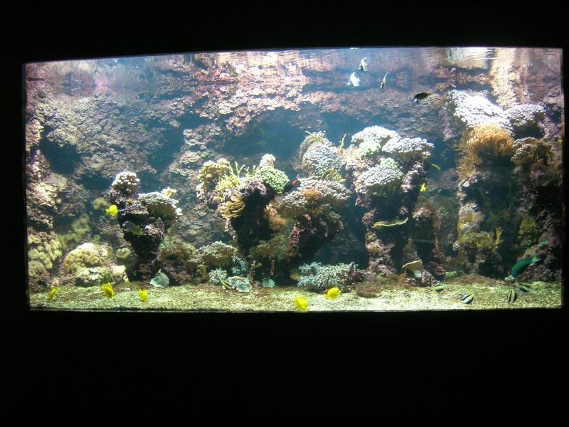 Aquarium La Rochelle Dscn4213