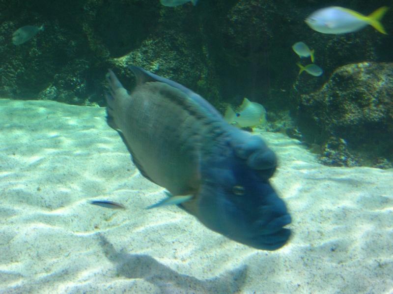 Aquarium La Rochelle Dscn4214