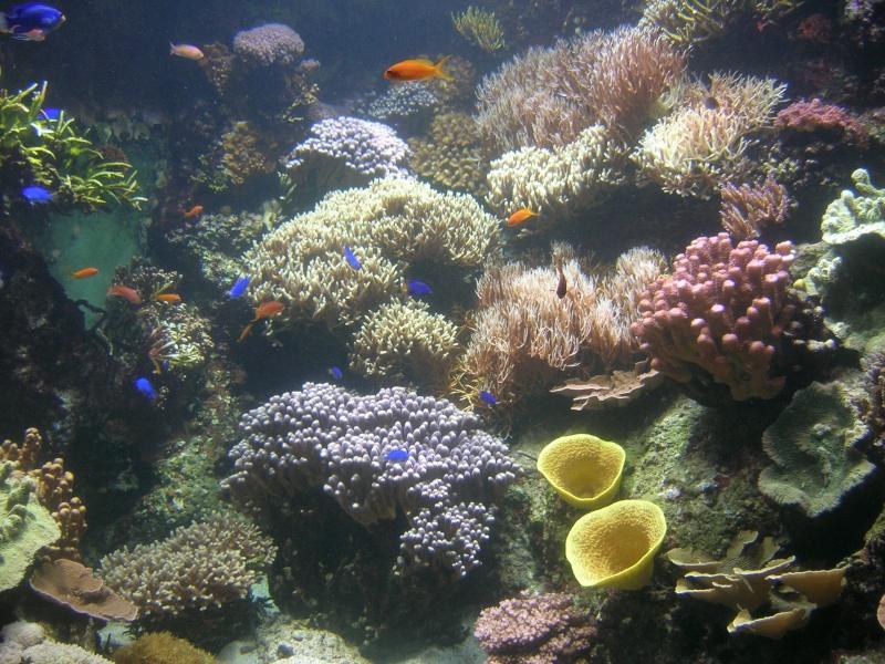 Aquarium La Rochelle Dscn4215
