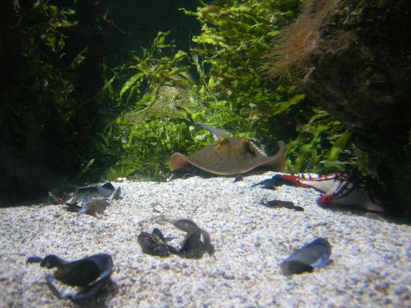 Aquarium La Rochelle Dscn4311