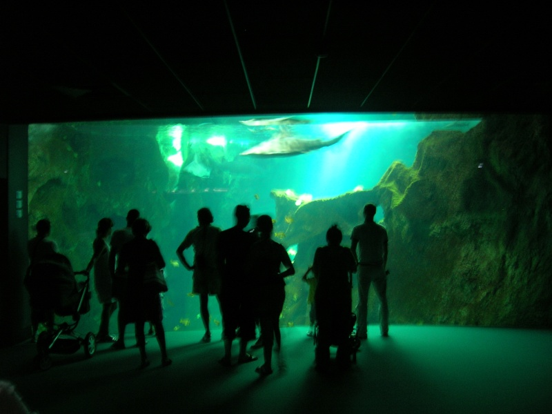 Aquarium La Rochelle Dscn4312