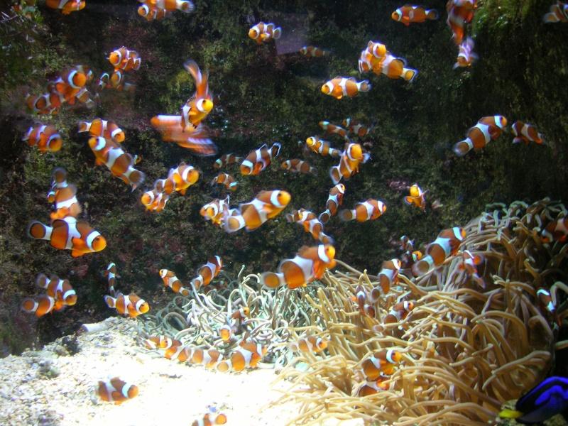 Aquarium La Rochelle Dscn4313