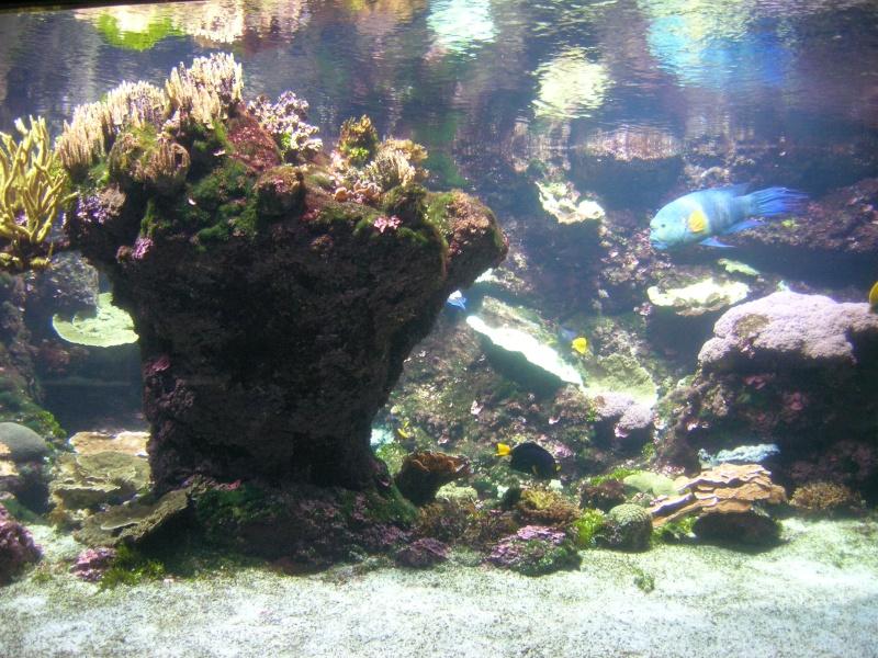 Aquarium La Rochelle Dscn4314