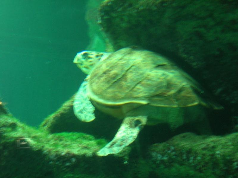 Aquarium La Rochelle Dscn4315