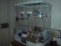 Nouvelle cage ! Ancien10