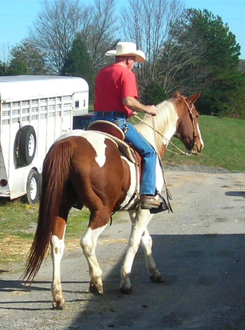 Two horses for sale.. Majord17