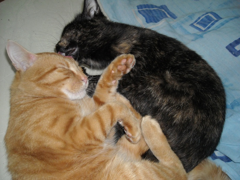 My kittens:) Dscn1610