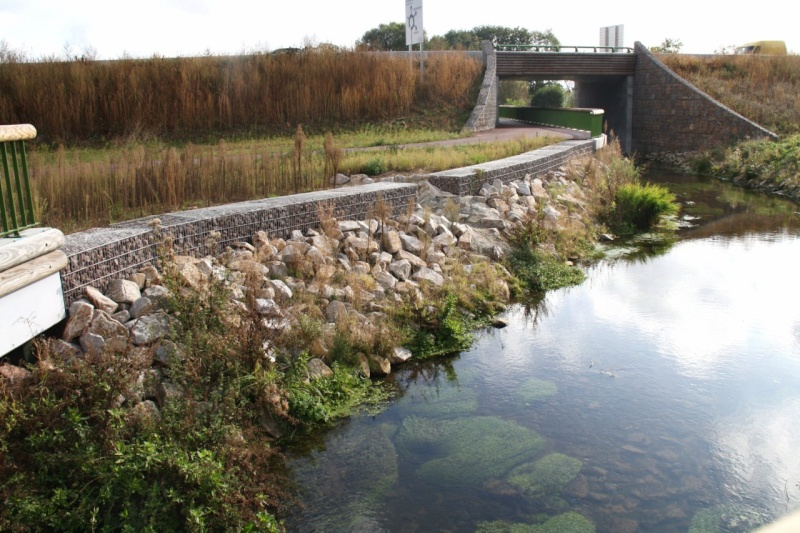 La Mossig , notre rivière Img_5611