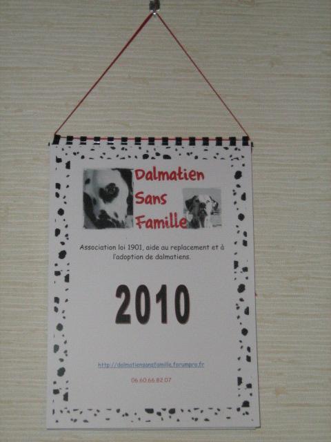 Ouverture de la boutique en ligne. Dalmatien sans famille Img71811