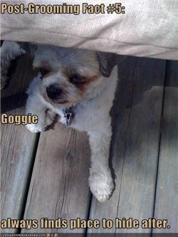 Your Dog's Name? Postgr10