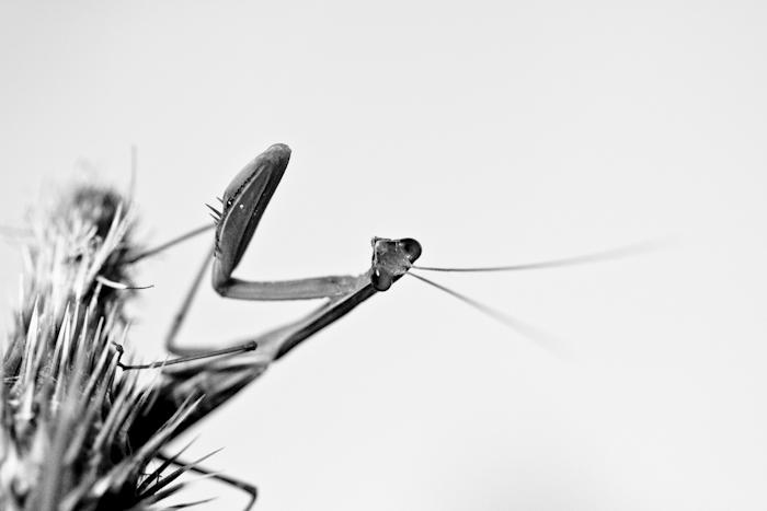 J'ai faim!!! Insect15