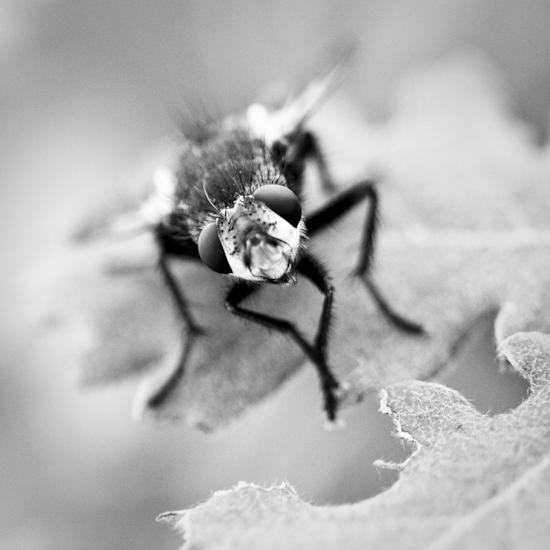 Du coin de l'oeil! Insect29
