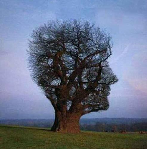des arbres pas comme les autres Arbre110