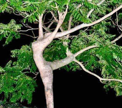 des arbres pas comme les autres Arbre210
