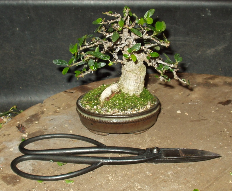 Burt Davii ficus progression shots 17_bur10
