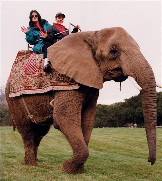 Michael e gli animali!! - Pagina 2 Elepha10