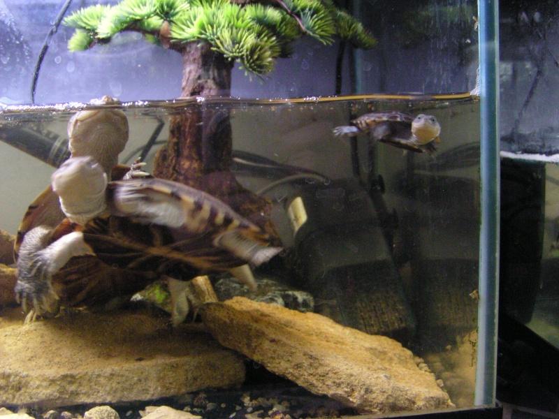 ma zoo famille Annima14