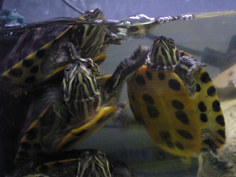ma zoo famille Annima15