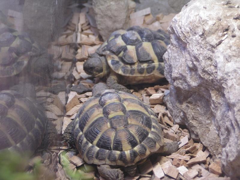 ma zoo famille Annima16