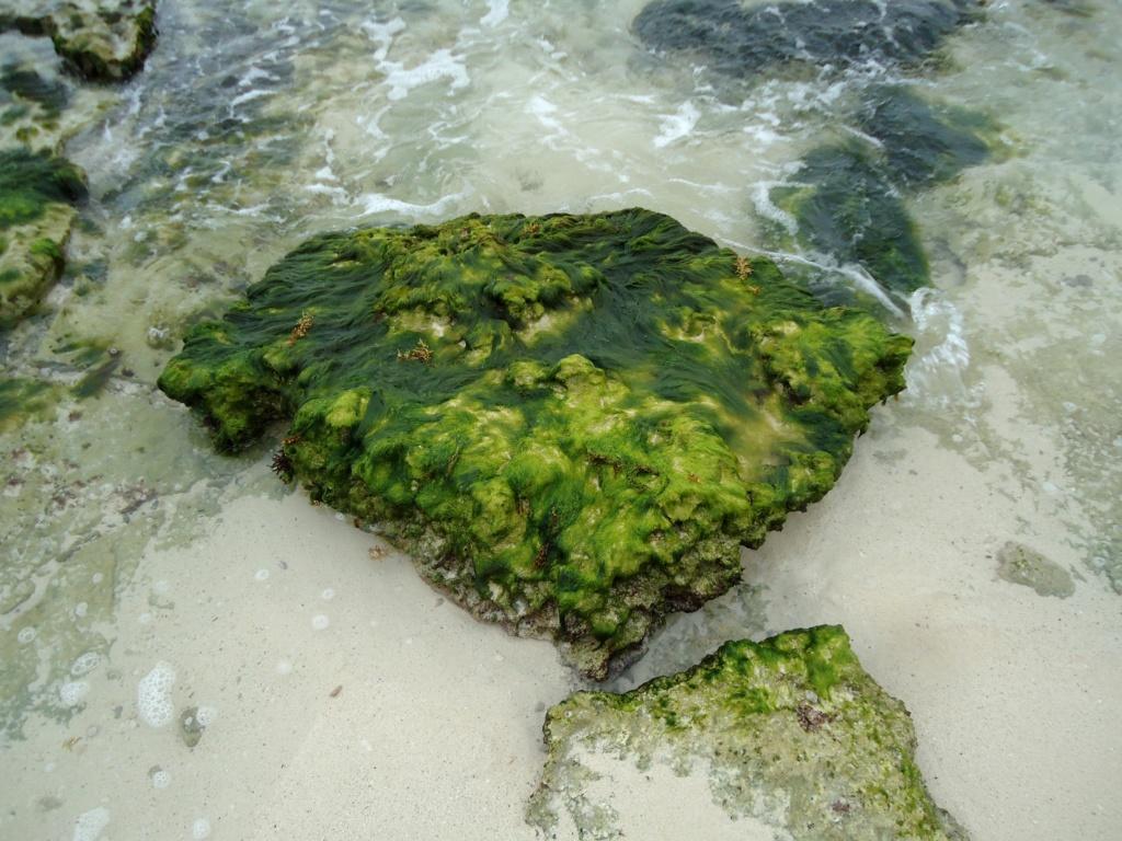 [fil ouvert]  Sable et plages  - Page 4 2010-027