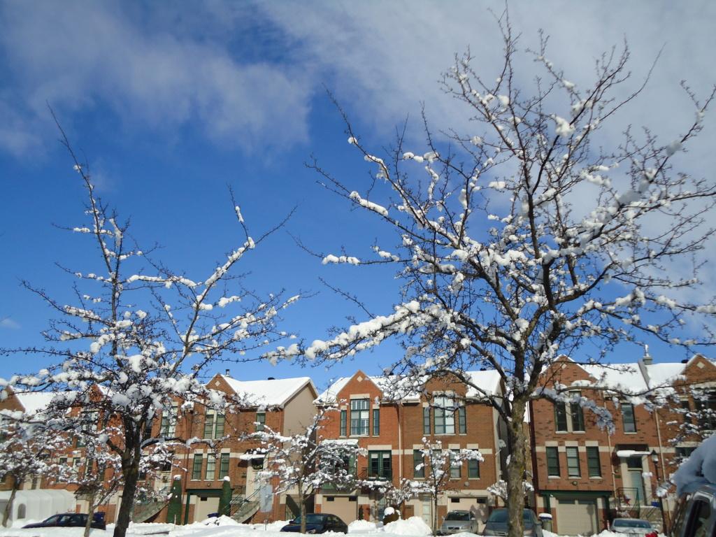 Neige à vendre ! 2012-026