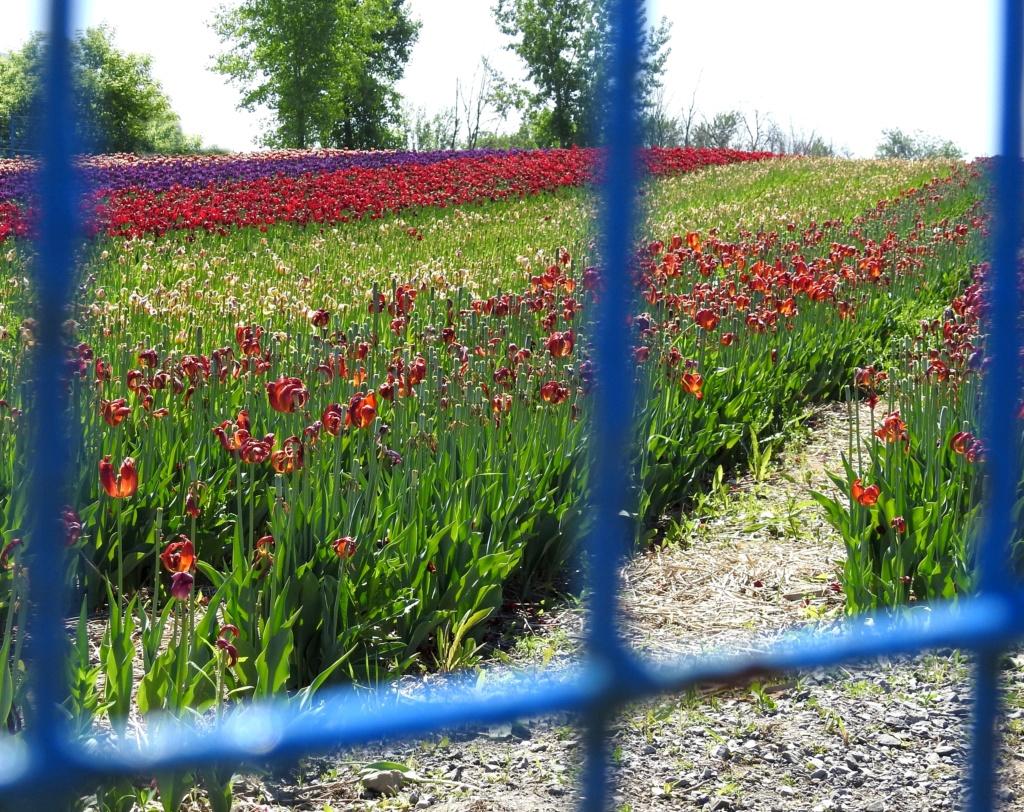 Thème du mois d'octobre 2019 :   Fleurs et jardins  2018-080