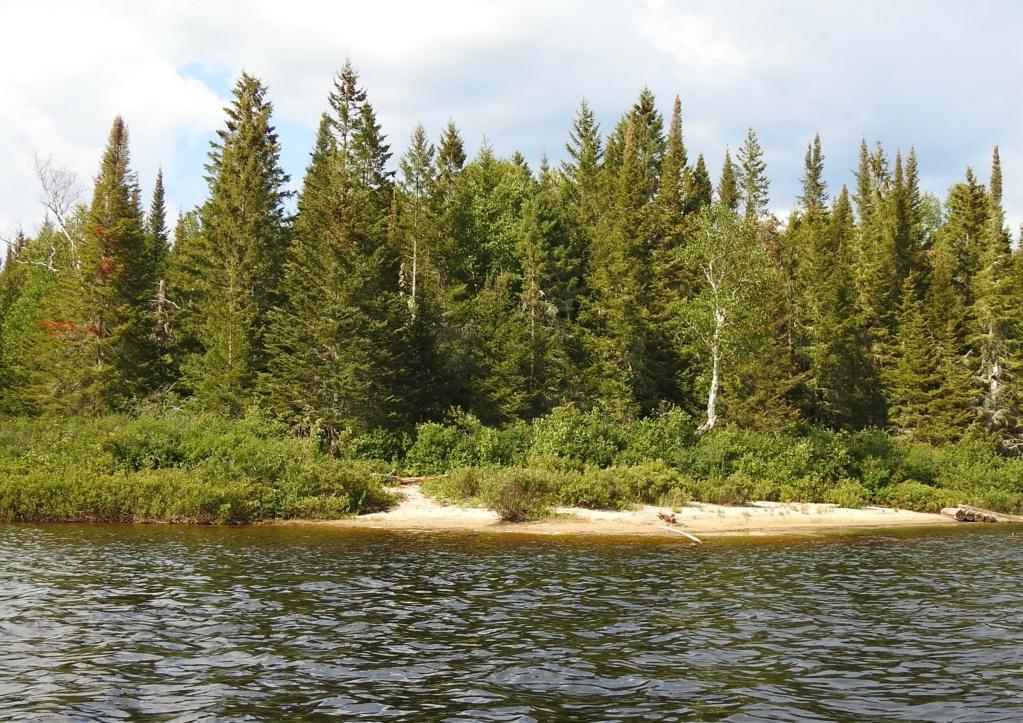 <°)))))<  Paysages du Lac Bouchette  - Page 2 2020-079