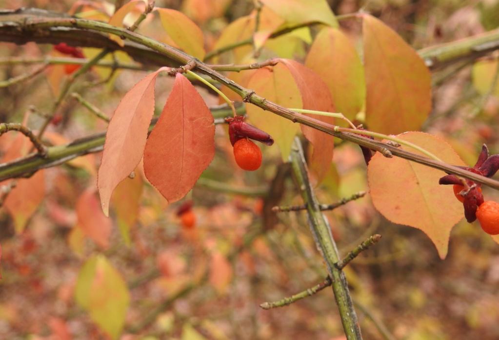 [Fil ouvert] Fruit sur l'arbre - Page 11 A2018-18
